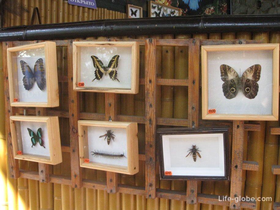 Сад тропических бабочек, Ласточкино гнездо