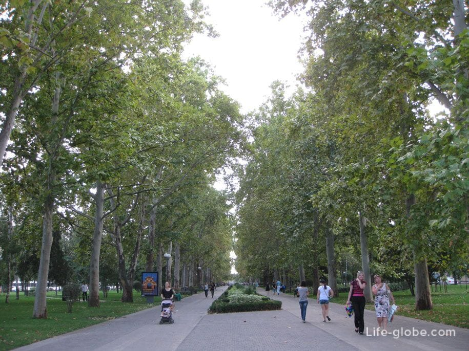 Часть улицы Красной - платановая аллея, Краснодар