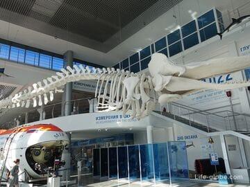 Экспозиция «Глубина» в музее Мирового океана, Калининград (Фондохранилище)