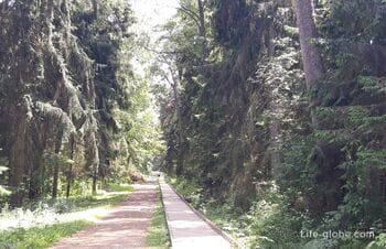 Royal Forest on the Curonian Spit. + access to the Baltic Sea