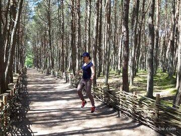 Танцующий лес на Куршской косе, Калининградская область