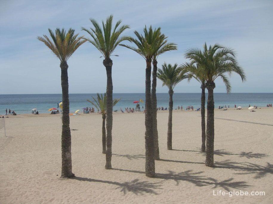Пальмы на пляже Поньенте, Бенидорм
