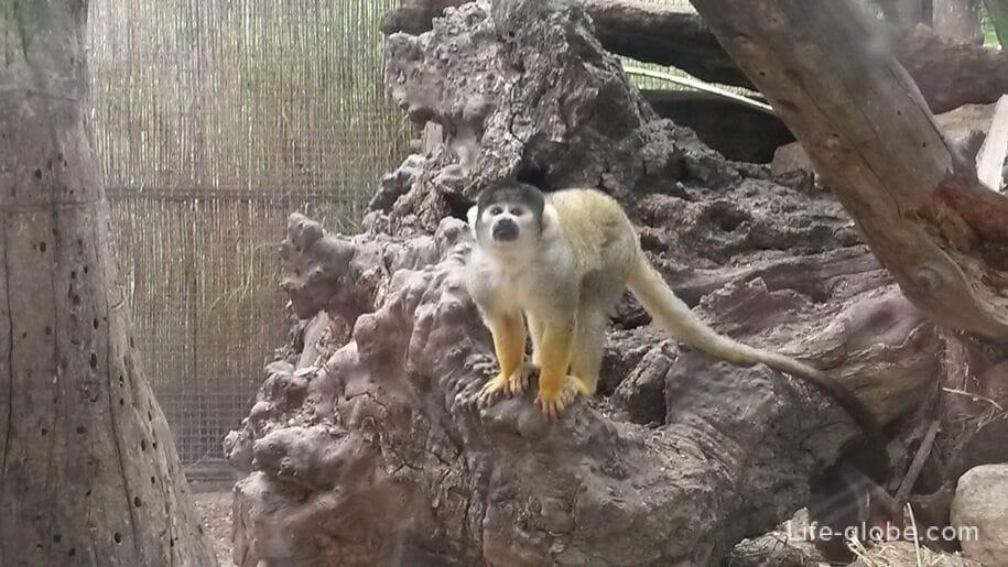 Зоопарк в Бенидорме