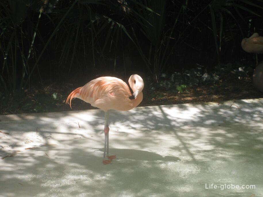 Розовые фламинго в парке Терра Натура, Бенидорм