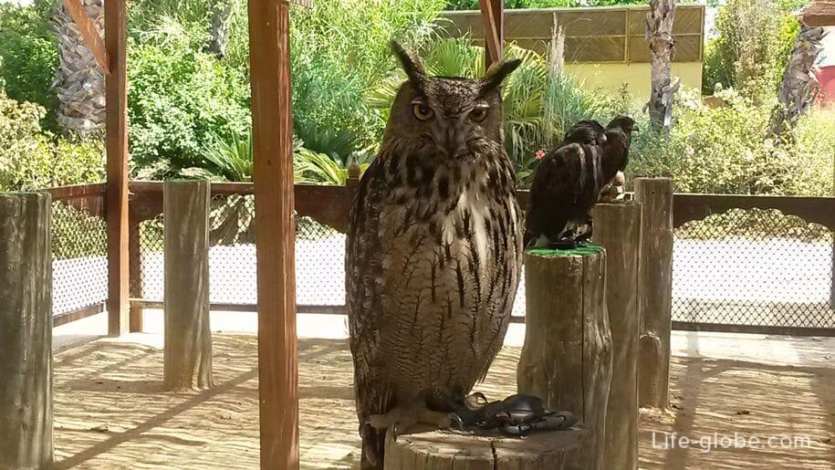 Хищные птицы в парке Терра Натура, Бенидорм