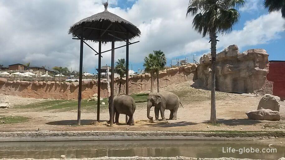 Слоны в парке Терра Натура, Бенидорм