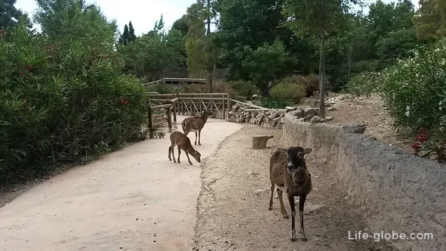 Европа в парке Терра Натура, Бенидорм