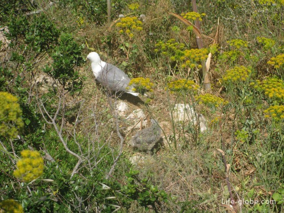Природный парк Ифач, Кальп