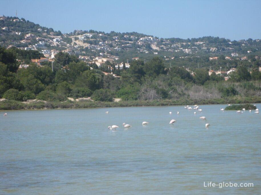 Достопримечательности Кальпе - соленое озеро и розовые фламинго