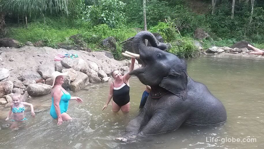 Bathing with the baby elephant in Phuket