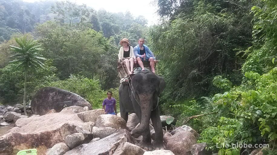 Катание на слонах, Пхукет