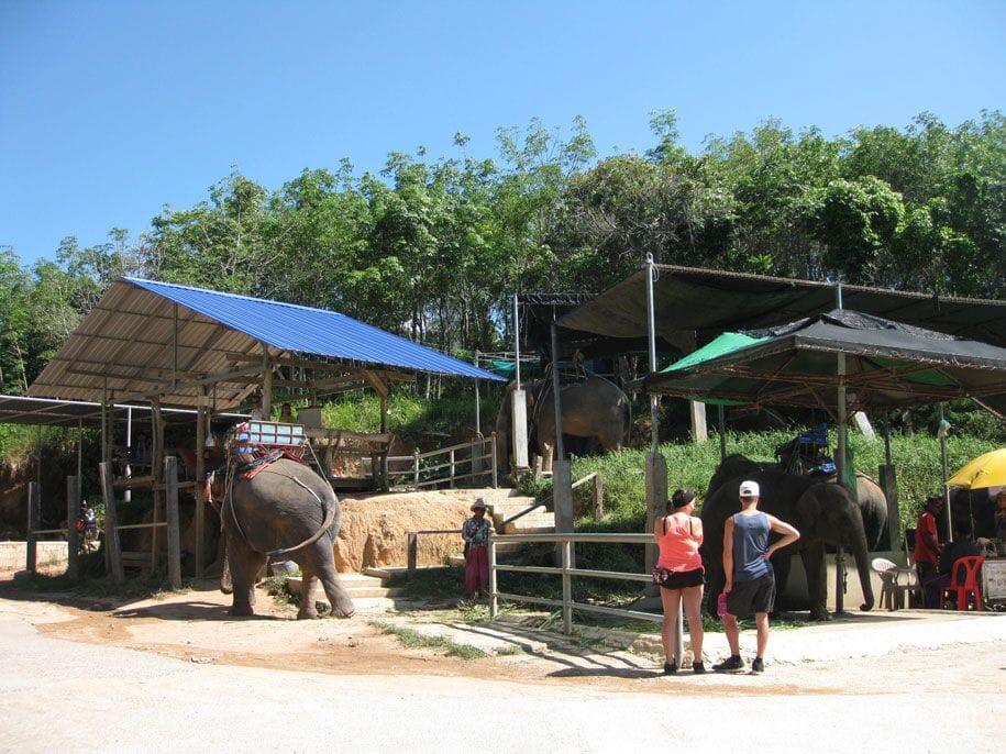 Слоновья ферма Elephant Station, пешком до Биг Будды