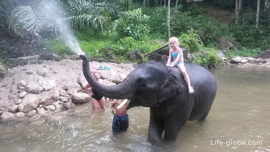 Baby elephant bathing, Phuket
