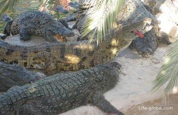Djerba Explore Park on Djerba Island, Tunisia: crocodile farm, ethnographic village, museum of folk traditions and crafts