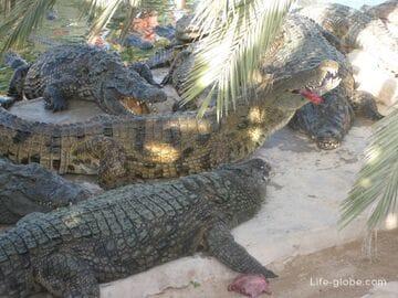 Парк Djerba Explore на острове Джерба, Тунис: крокодиловая ферма, этнографическая деревня, музей народных традиций и ремесел