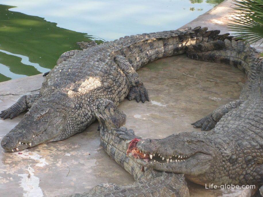крокодиловая ферма джерба на карте