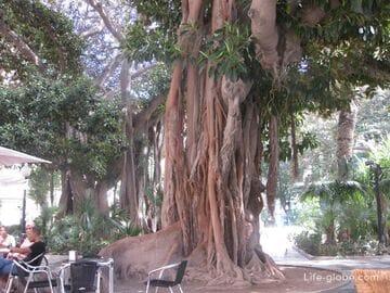 Габриель Миро - самая зеленая площадь Аликанте. Plaza Gabriel Miro Испания