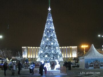 Новогодние ёлки Краснодара