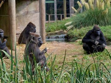 В Великобритании туристы могут жить прямо в зоопарке, рядом с тиграми и бегемотами