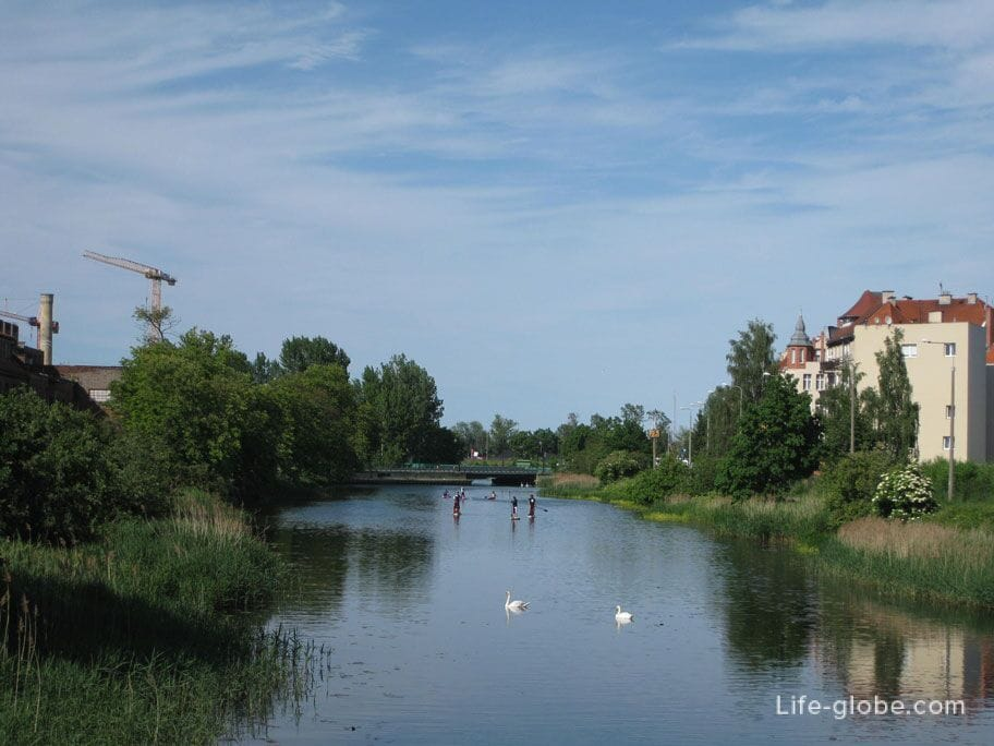 swans and kayaks Gdansk