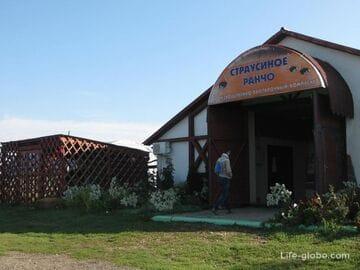 Страусиное ранчо, Горячий ключ, Молькино (Краснодар)