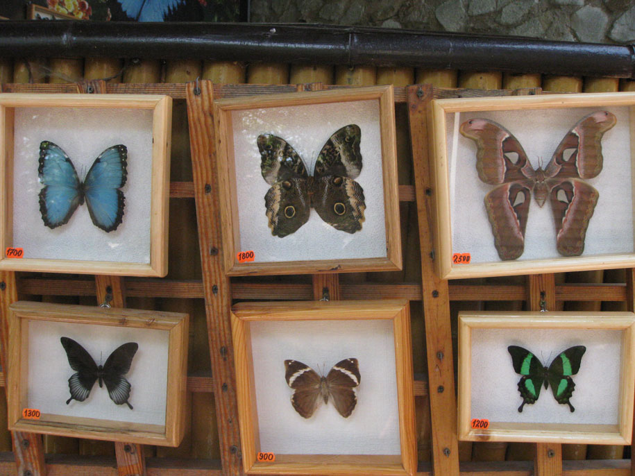 Сад тропических бабочек у замка Ласточкино гнездо, Крым