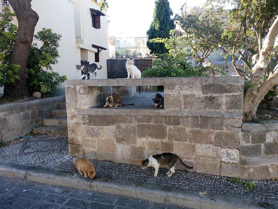 Кошки на Родосе, Греция