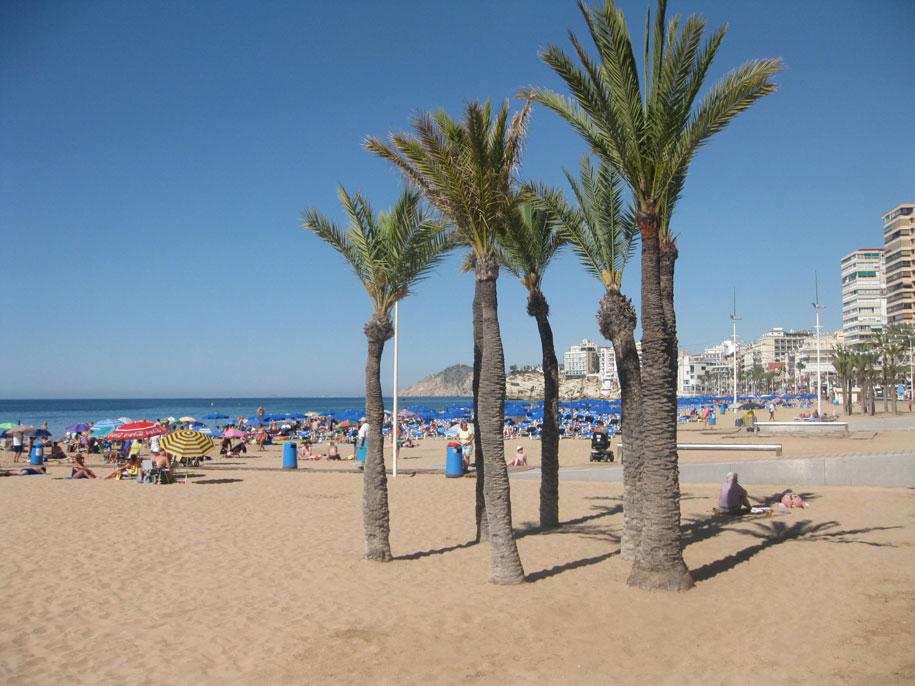 Пальмы на пляже Леванте в Бенидорме