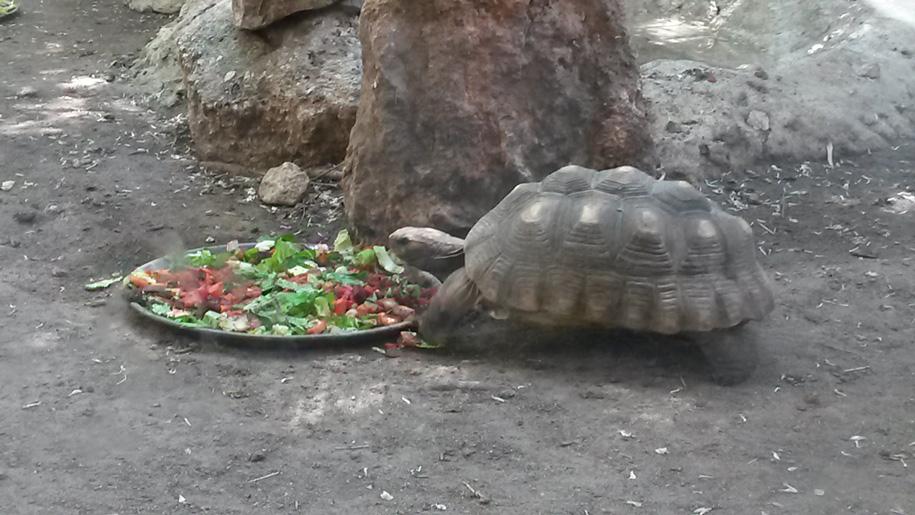 Зоопарк Терра Натура в Бенидорме