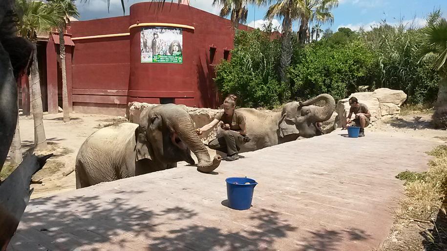 Кормление слонов в парке Терра Натура, Бенидорм