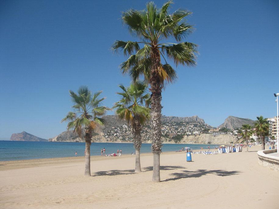 Пальмы на пляже Ареналь-Бол, Испания