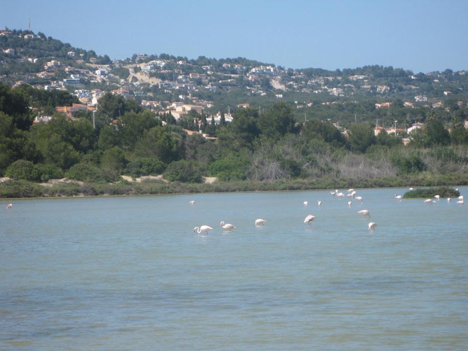 Розовые фламинго в Кальпе, соленое озеро Лас Салинас