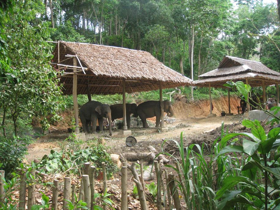 Слоновья ферма Khok Chang Kata Safari, по пути к Карон Вив Поинт
