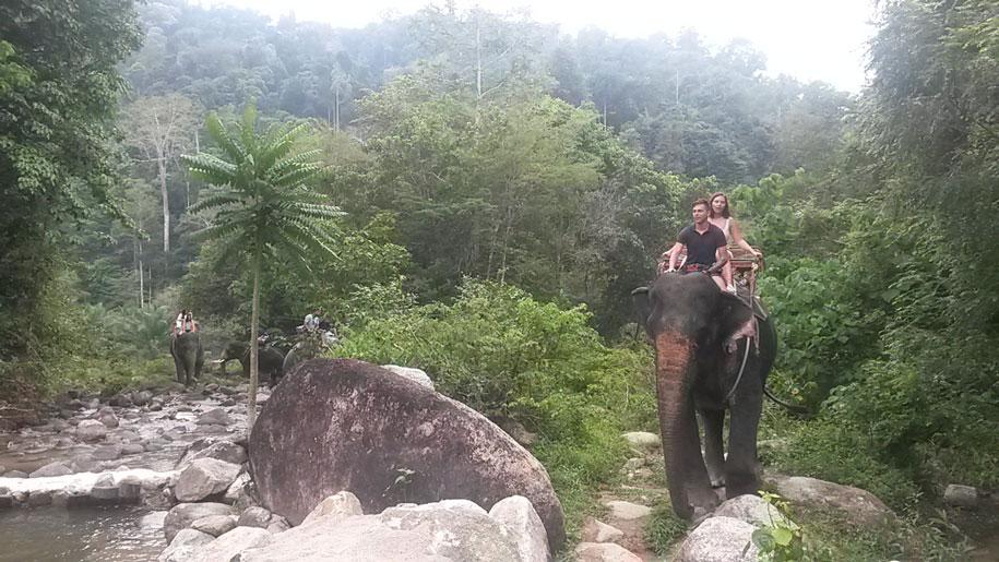 Сафари на слонах, Пхукет