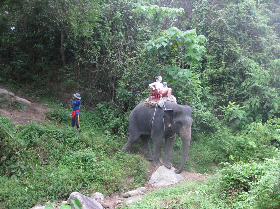 Сафари на слонах на Пхукете