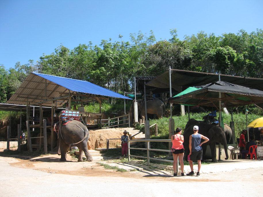Слоновья ферма Elephant Station, Пхукет