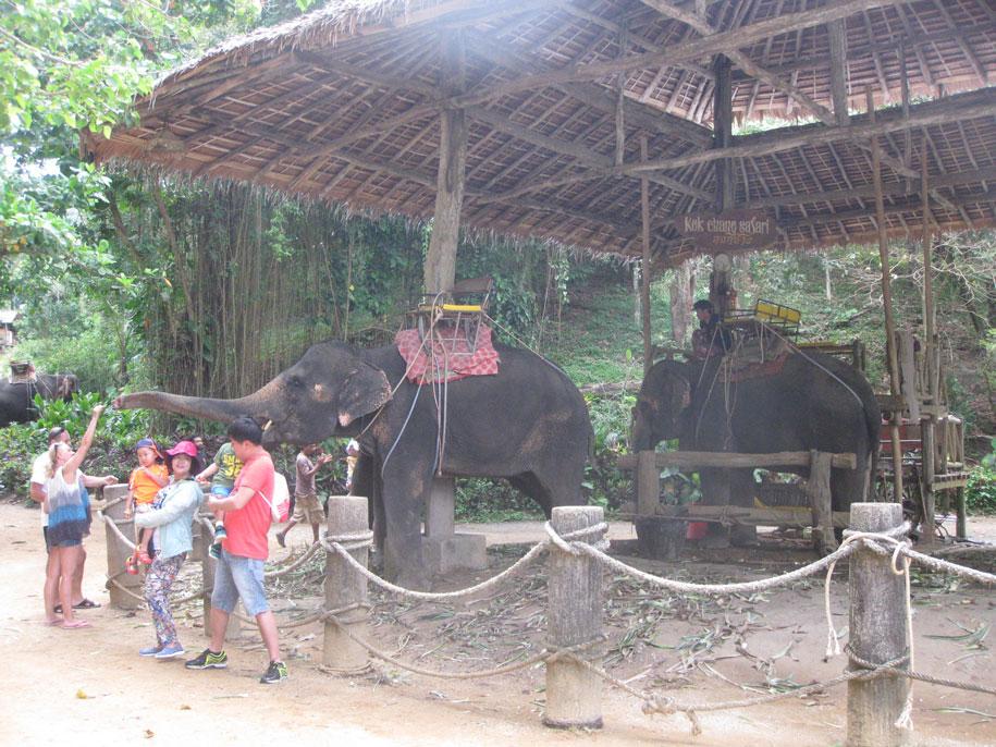 Слоновья ферма Khok Chang Kata Safari, Пхукет