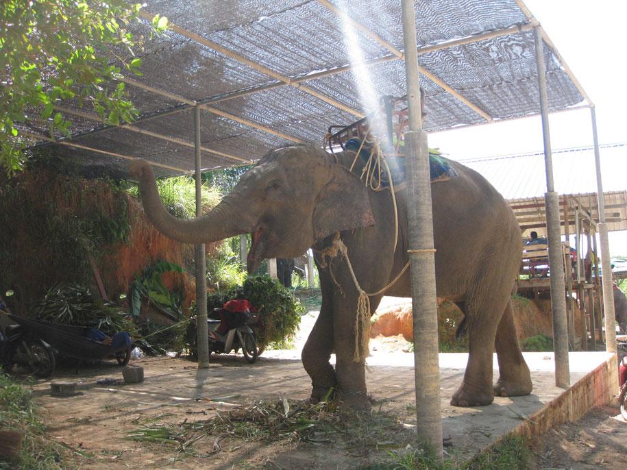 Слоновья ферма Elephant Station, по пути до Биг Будды, Пхукет