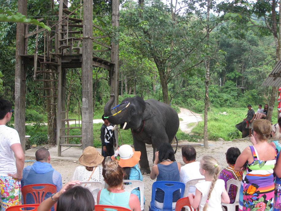 Шоу со слоненком на слоновьих фермах, Таиланд