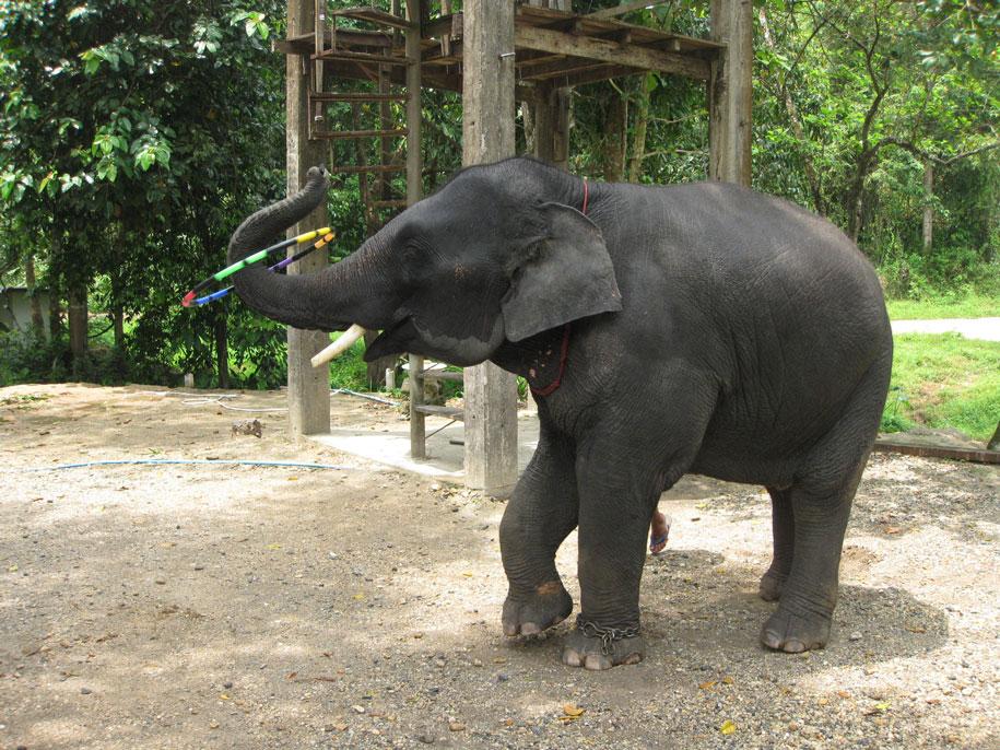Шоу со слоненком, Пхукет