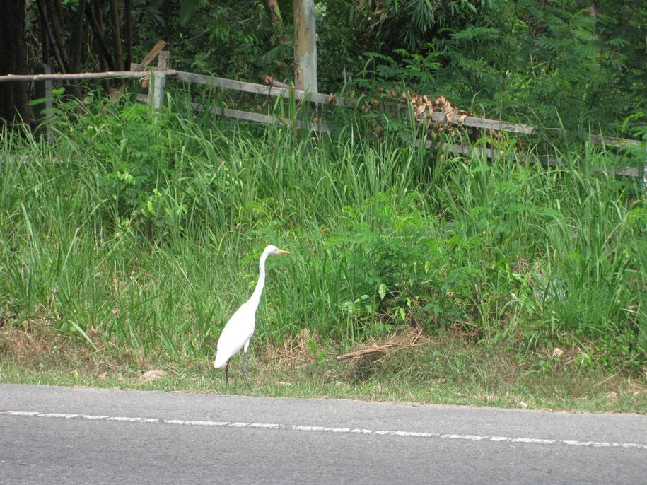 Активный отдых на острове Пхукет, Таиланд