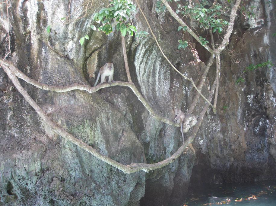 Пляж Обезьян, острова Пхи-Пхи