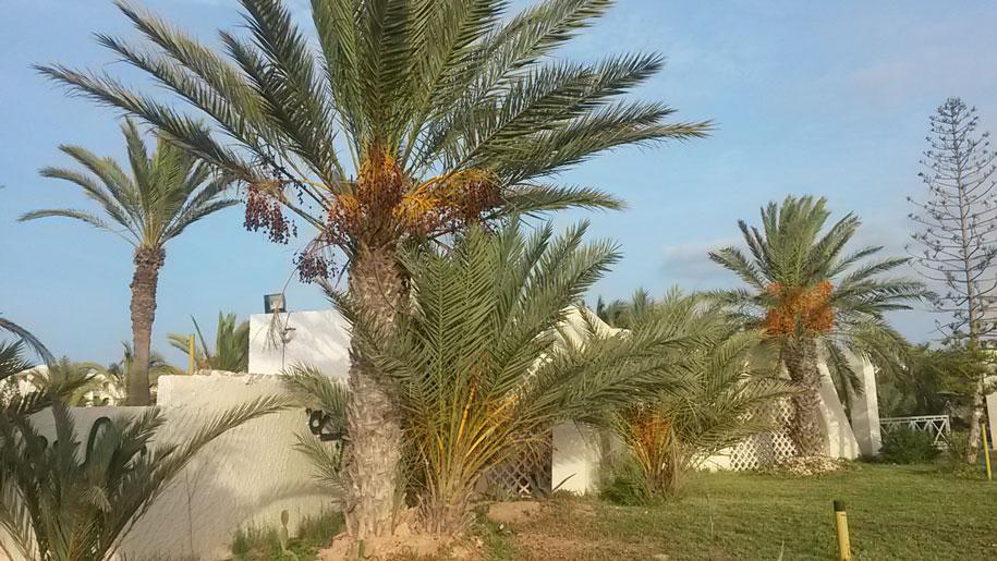 Остров Джерба, Тунис, туристическая зона у отелей