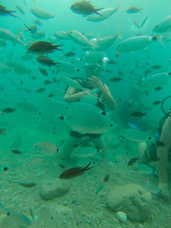 кормление рыбок под водой